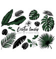 Tropical leaves collection isolated elements on