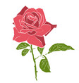 beautiful hand drawn stencil rose isolated on vector image