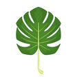 monstera leaf isolated vector image vector image