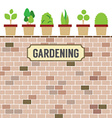 Pot Plants On Brick Wall Gardening Concept vector image vector image