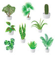 set of homemade green plants in colorful pots vector image vector image