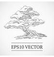 Sketched vintage bonsai tree vector image