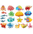 large set many sea creatures on white vector image
