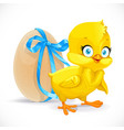 fluffy little chicken and egg tied with a blue vector image vector image