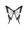 hand drawn yellow swallowtail butterfly vector image vector image