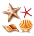 Realistic 3d sea shell starfish set
