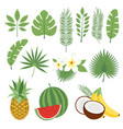 set of cute tropical leaves and fruits palm vector image