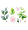 watercolor hand painting set of peony vector image vector image