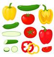 bright of pepper tomato vector image