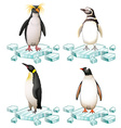 Different types of penguins on ice vector image