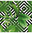 exotic jungle plant tropical palm leaves vector image vector image