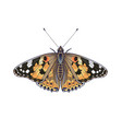 Colorful vanessa cardui butterfly isolated on