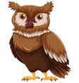 cute owl with brown feather vector image vector image