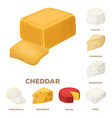 different kind of cheese cartoon icons in set vector image