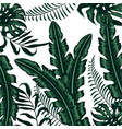 exotic plants branches nice leaves vector image vector image