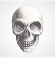 human skull on light background vector image vector image