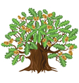 Oak tree with acorns vector image