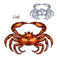 red crab animal isolated sketch vector image