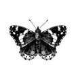 hand drawn red admiral butterfly vector image vector image