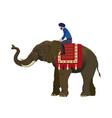 man riding an elephant vector image