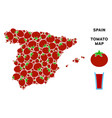 spain map composition of tomato vector image vector image