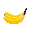 three bananas on a white background style vector image vector image
