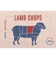 Label for meat with text Lamb Chops vector image