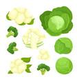 bright of colorful cauliflower vector image