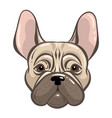 french bulldog tatoo style vector image
