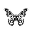 hand drawn black and white butterfly vector image