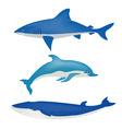 sea animals on white vector image vector image