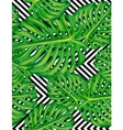 Seamless pattern of leaves monstera vector image