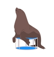 Circus Fur Seal hand drawn seal cartoon vector image