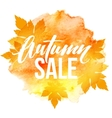 Autumn leaves Watercolor texture Fall leaf Sale vector image vector image