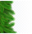 fir tree border background christmas tree vector image vector image