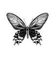 hand drawn antropaneura semperi butterfly vector image vector image