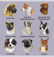 set of portraits of dog breeds vector image vector image