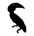 silhouette of the bird toucan on a white vector image