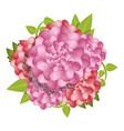 camellia fresh flower concept background cartoon vector image