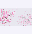 cherry blossom sakura background with pink flower vector image vector image