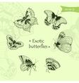 exotic butterflies vector image