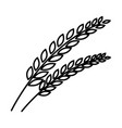 thin line wheat icon vector image vector image