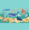 underwater sea ocean animals corals and seaweeds vector image