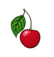 beautiful cartoon red cherry with black contour vector image vector image