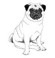 black and white of a mops vector image