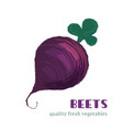 fresh beets isolated on white background vector image
