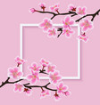 square frame with a sakura or cherry blossom vector image
