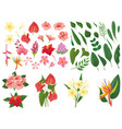 tropical flower tropic forest flowers exotic vector image vector image