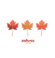 autumn leaves fall leaves design collection for vector image