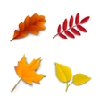 Autumn oak maple ash birch leaves vector image vector image